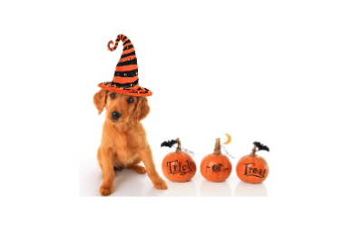 image for 6 Tips to Keep Your Pets Safe this Halloween!